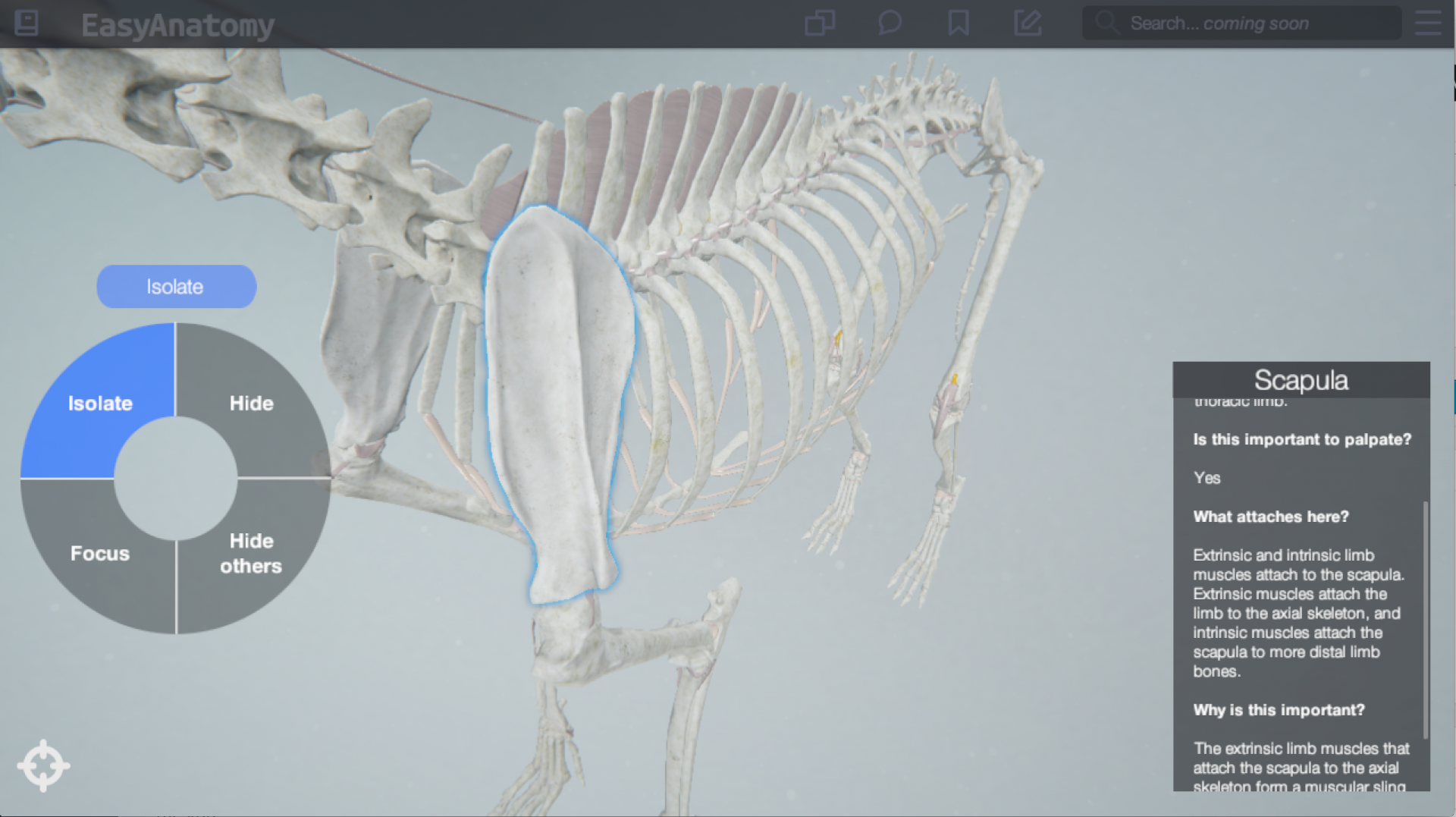 EasyAnatomy written content. 3D Canine Anatomy explanations. 3D Canine Anatomy Study app for veterinary students and veterinary education. EasyAnatomy.