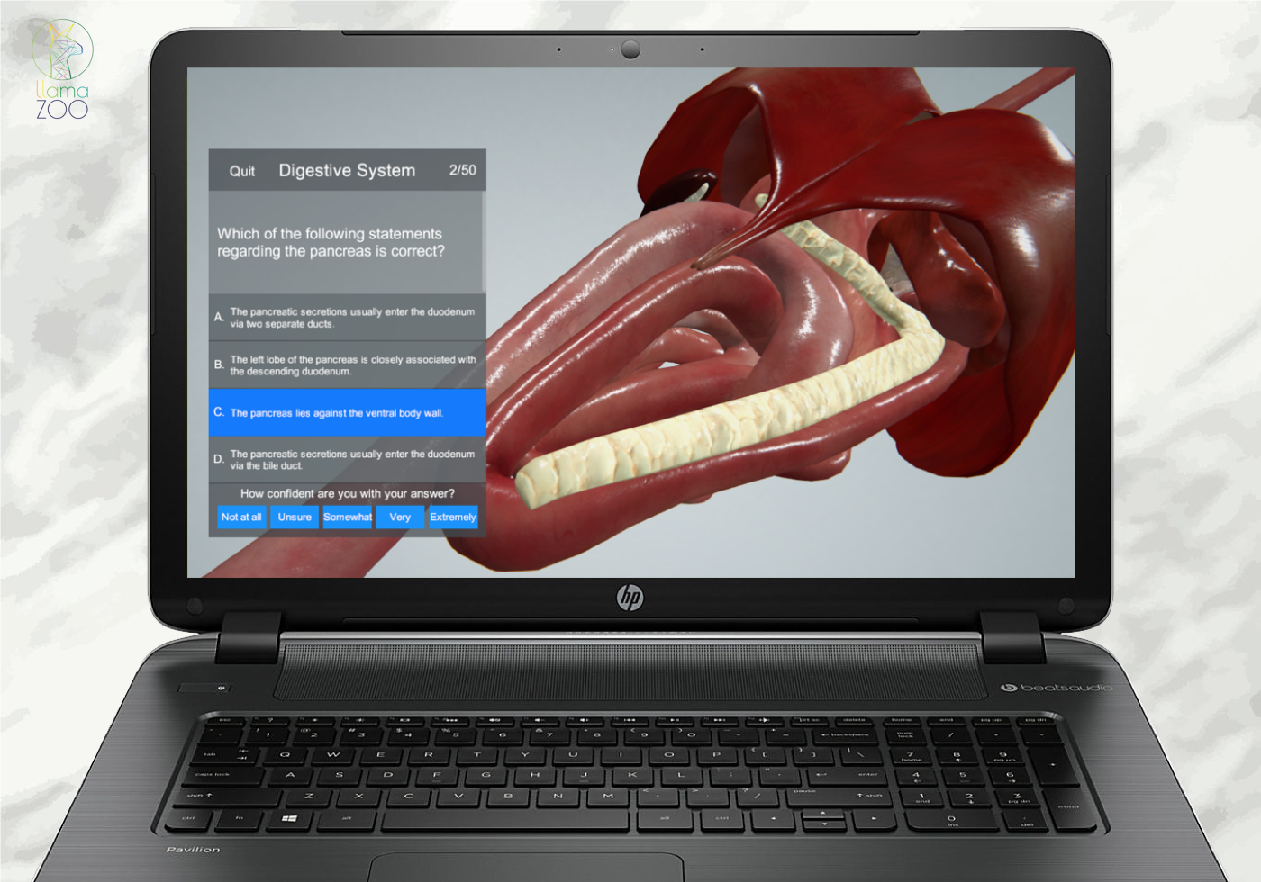How your veterinary practice can benefit from virtual canine anatomy