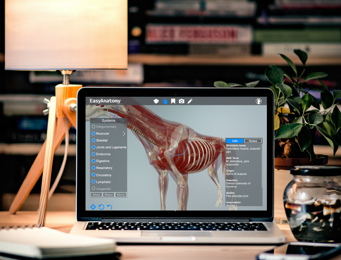 EasyAnatomy Makes Learning Veterinary Anatomy Easy