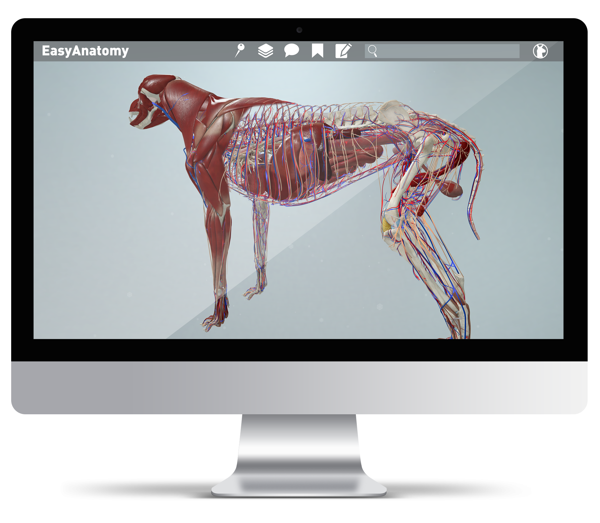Easyanatomy 3d Canine Anatomy For Veterinary Students